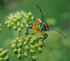 Types and solutions of garden pests