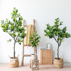 How to grow lemon trees in pots?