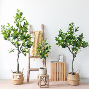 lenmon trees in pot