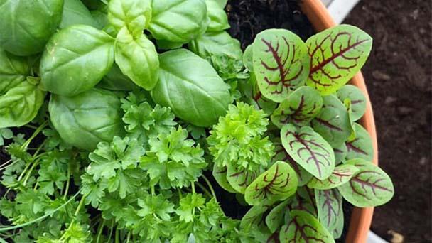 Thirteen herbs garden idea