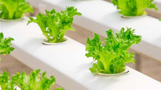 Notes of hydroponics for beginners