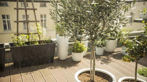 Nine choices for large trees in pots