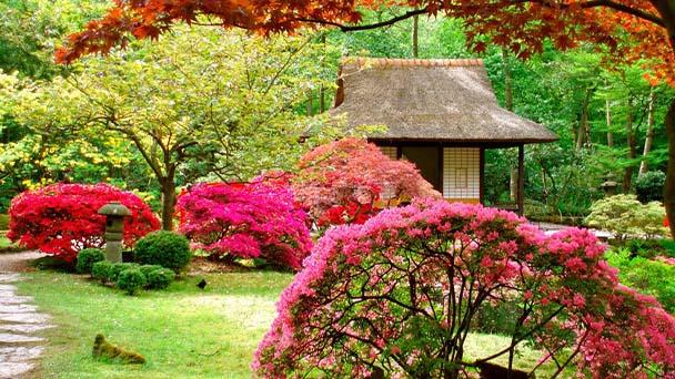 Planting a Japanese garden