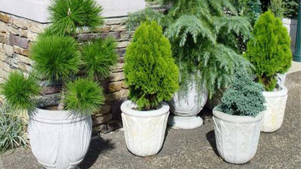 Attentions for small trees for pots
