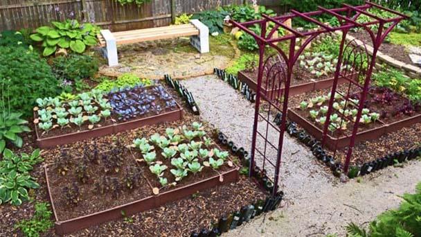 Precautions And Some Vegetable Garden Ideas Rayagarden
