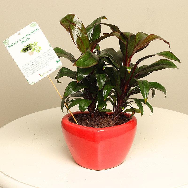 herb gardening indoors