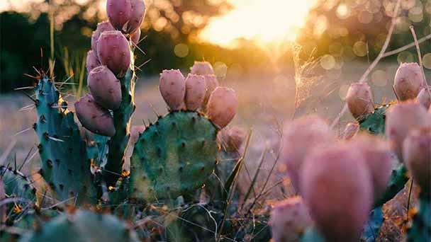 Cacti Profile