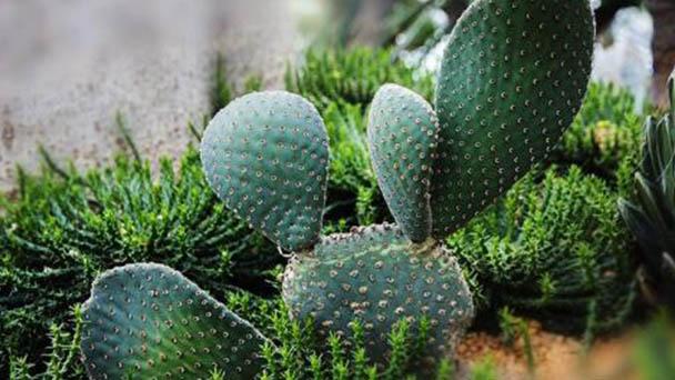 How to grow Cactus in winter