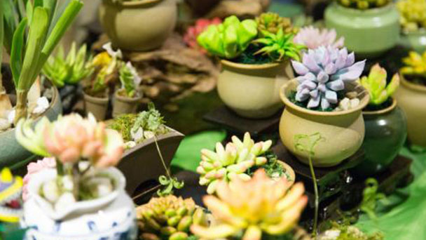 How to care for succulent plant