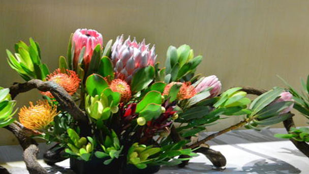 How to grow and care for King Protea
