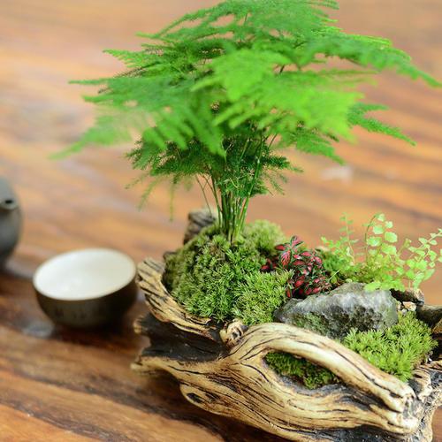 Asparagus fern - most common house plant