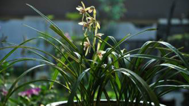 Orchids caring tips