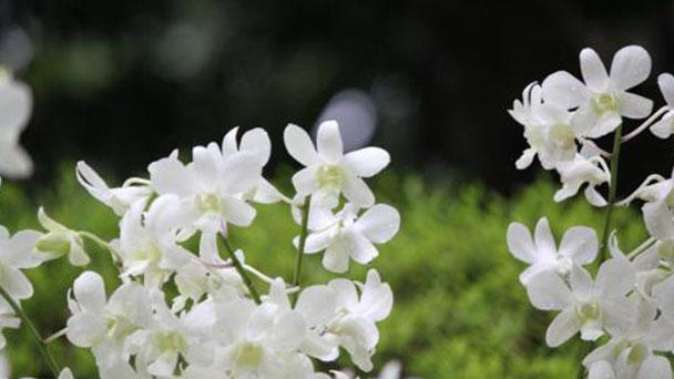 Propagation methods of Magnolia Alba