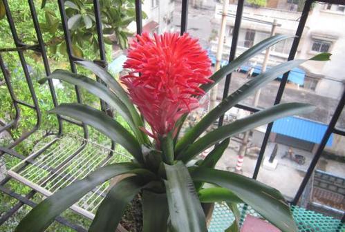 foolproof plants