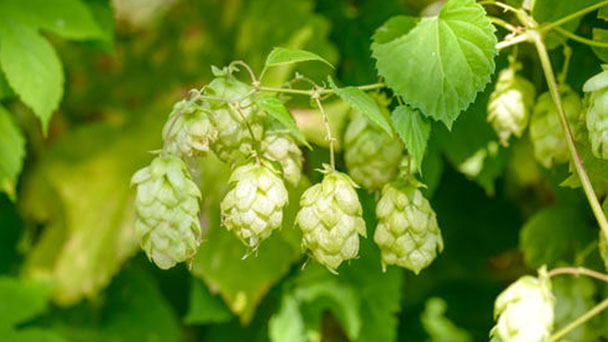 Propagation methods of Common Hop