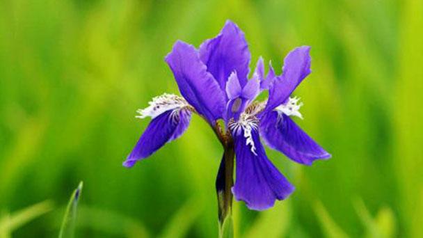 Propagation methods of Irises