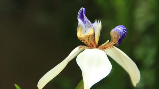 Propagation methods of Walking Iris