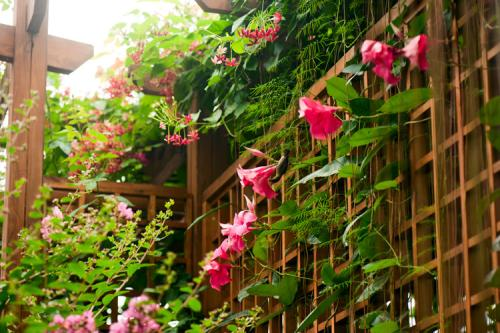 Brazilian jasmine