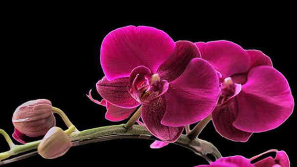 3 flowers growing indoors