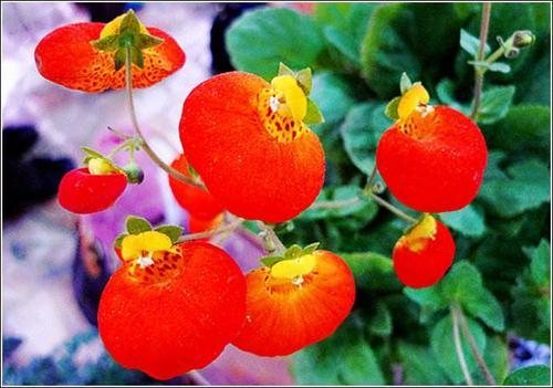 PocketBook Flower