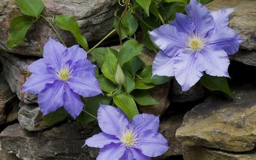 7 flowers propagating in winter