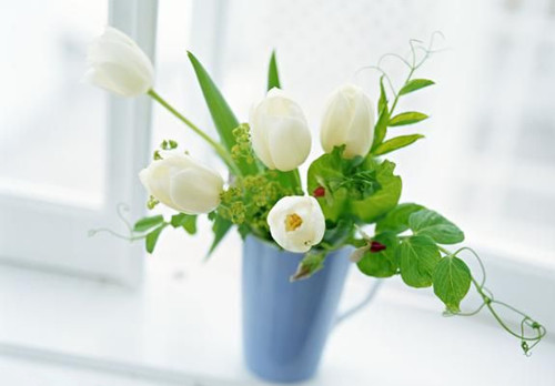 tips for growing flowers indoors.