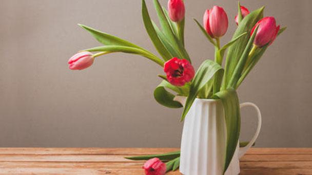 Garden tulip profile