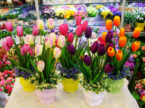 propagation method of Garden tulip