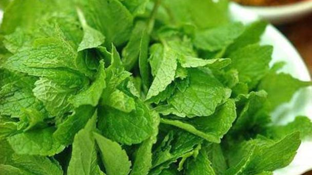 How to take care of mint