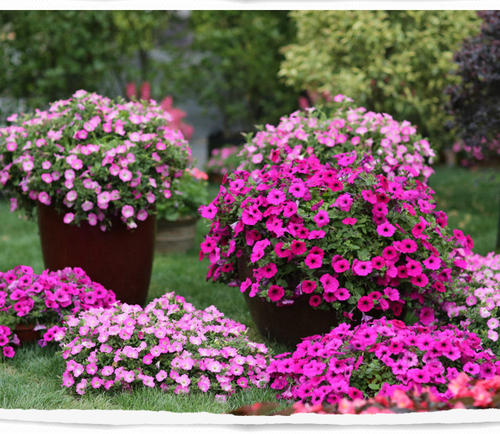 10 flowers suitable for growing in summer