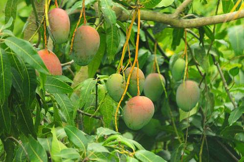 12 fruits maturing in summer