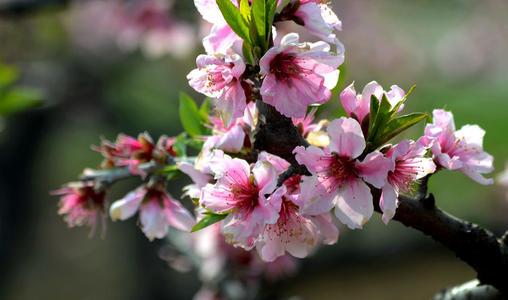 6 flowers that bloom in spring