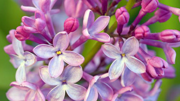 Top 10 most beautiful flowers blooming in spring