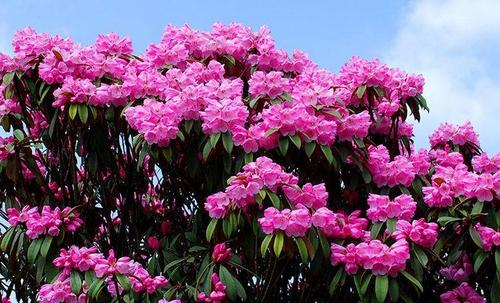 top 10 most beautiful flowers blooming in spring.