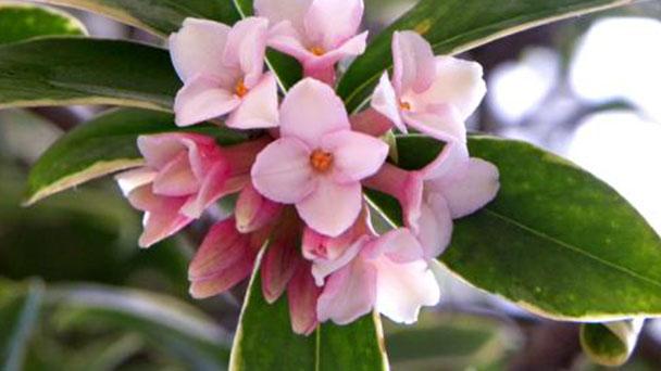 10 best flower grows in winter indoors
