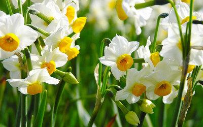 10 flowers grows in winter indoors