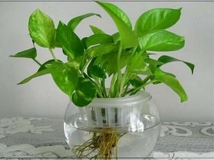 ten kinds of plants easy to grow in winter
