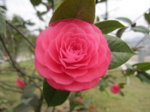 5 flowers that bloom in winter