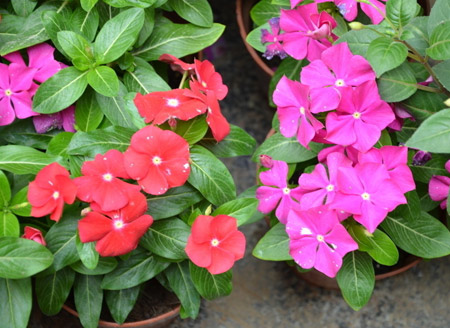 8 best flowers growing on the balcony.