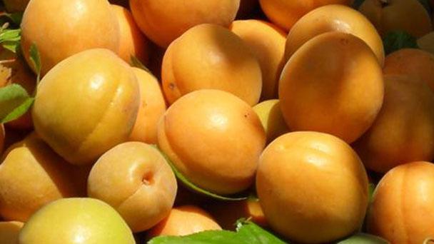 Armenian plum profile