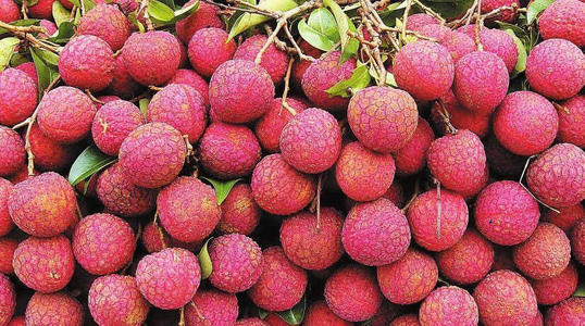 care for Lychee