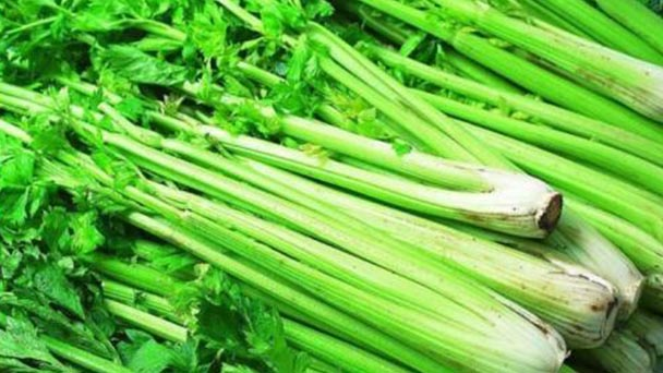 How to grow celery indoors