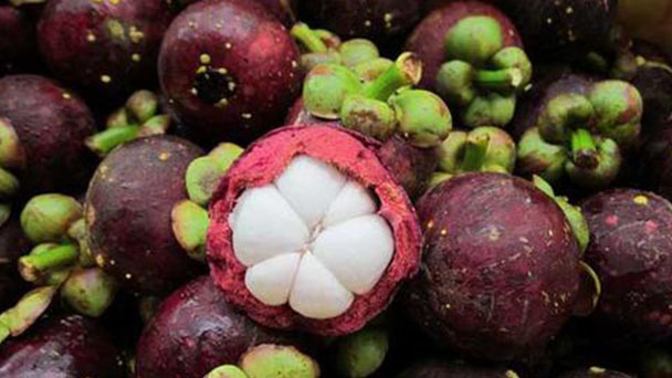 How to propagate Mangosteen