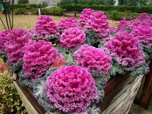 10 best large potted plants grow in winter