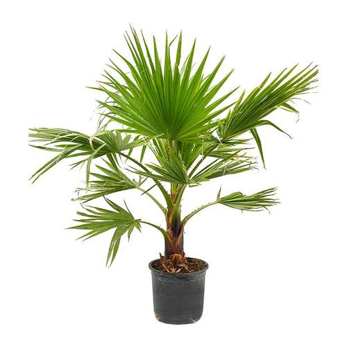 10 house plants best for purifying air