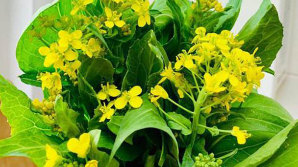 4 best vegetables to grow for beginners