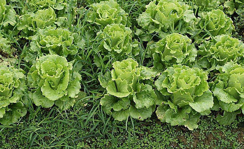 4 best vegetables to grow for beginners.