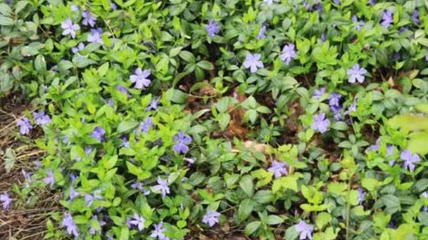 4 best creeping plant growing in the garden