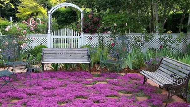 How to grow and care for creeping thyme