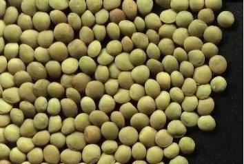 grow peas on the balcony.